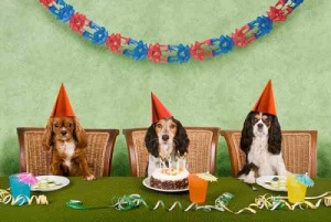 Even if you DO throw a puppy party, there's no guarantee they will enjoy themselves.